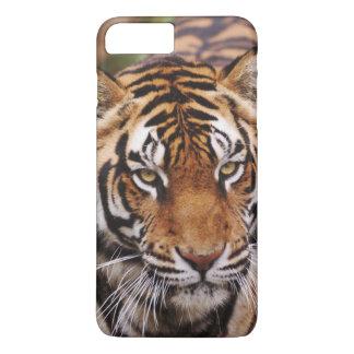 Bengal Tiger, Panthera tigris iPhone 8 Plus/7 Plus Case