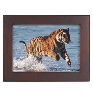 Bengal Tiger (Panthera Tigris) Keepsake Box