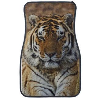 Bengal Tiger, Panthera tigris, Louisville Zoo, Car Mat