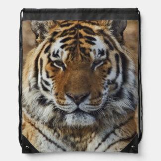 Bengal Tiger, Panthera tigris, Louisville Zoo, Drawstring Bag