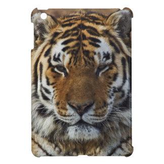 Bengal Tiger, Panthera tigris, Louisville Zoo, iPad Mini Covers