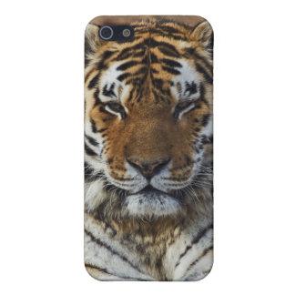 Bengal Tiger, Panthera tigris, Louisville Zoo, iPhone 5 Cases