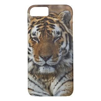 Bengal Tiger, Panthera tigris, Louisville Zoo, iPhone 7 Case