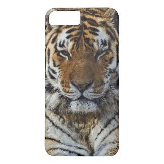 Bengal Tiger, Panthera tigris, Louisville Zoo, iPhone 7 Plus Case