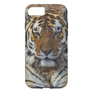 Bengal Tiger, Panthera tigris, Louisville Zoo, iPhone 8/7 Case