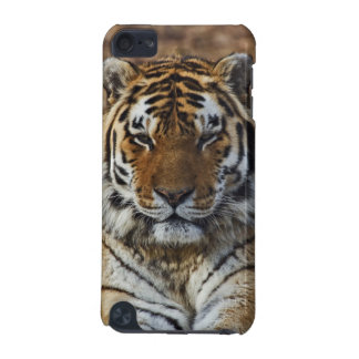 Bengal Tiger, Panthera tigris, Louisville Zoo, iPod Touch (5th Generation) Cases