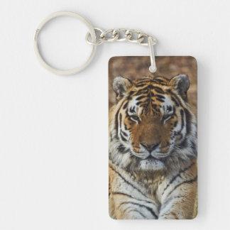 Bengal Tiger, Panthera tigris, Louisville Zoo, Key Ring