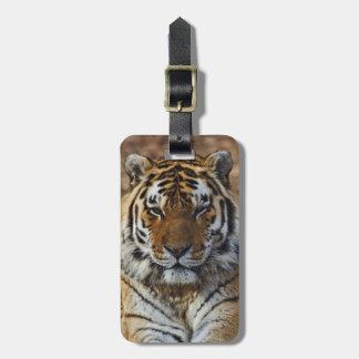 Bengal Tiger, Panthera tigris, Louisville Zoo, Luggage Tag