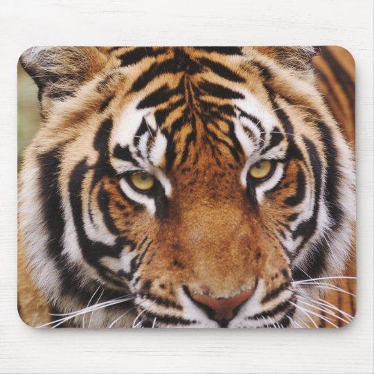 Bengal Tiger, Panthera tigris Mouse Mat