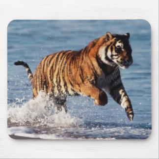 Bengal Tiger (Panthera Tigris) Mouse Pad