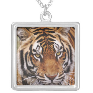 Bengal Tiger, Panthera tigris Silver Plated Necklace