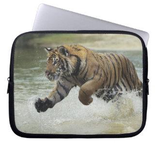 Bengal tiger (Panthera tigris tigris) charging Laptop Sleeve