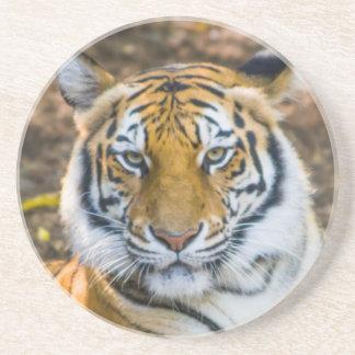 Bengal Tiger (Panthera Tigris Tigris) Coaster