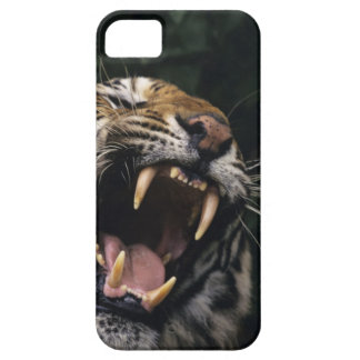 Bengal tiger (Panthera tigris tigris) snarling, iPhone 5 Cases