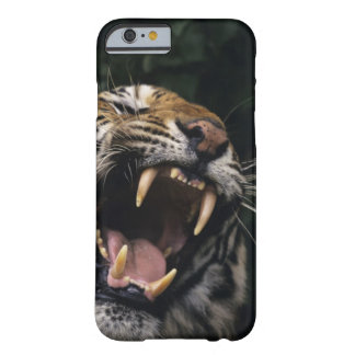 Bengal tiger (Panthera tigris tigris) snarling, Barely There iPhone 6 Case