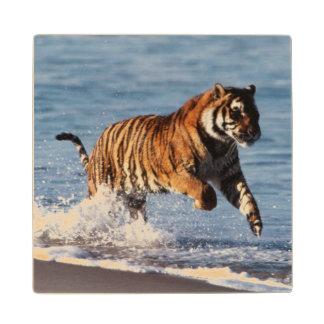 Bengal Tiger (Panthera Tigris) Wood Coaster