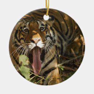 Bengal tiger resting, yawning christmas ornament