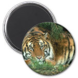 Bengal Tiger Round Button Magnet