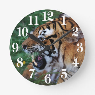 Bengal Tiger showing its fangs Round Clock