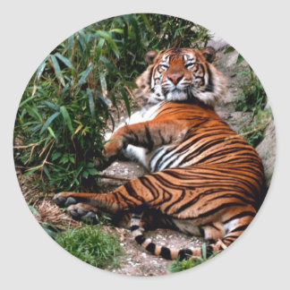 Bengal Tiger Round Stickers