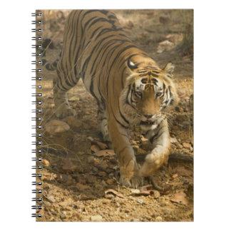 Bengal Tiger walking Notebook