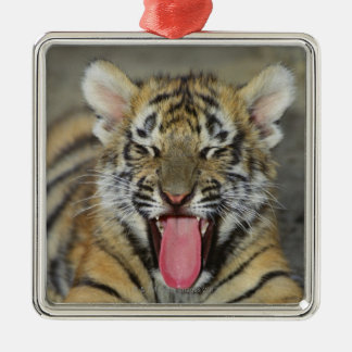 Bengal tiger yawning christmas ornament