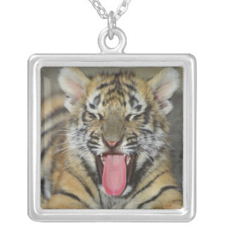 Bengal tiger yawning silver plated necklace