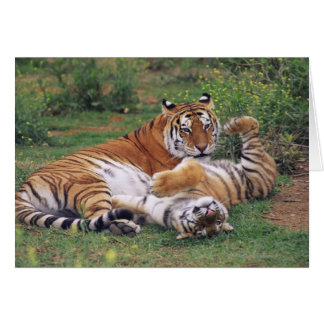 Bengal tigers playing card