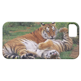 Bengal tigers playing iPhone 5 case