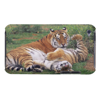 Bengal tigers playing iPod Case-Mate cases