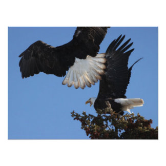 BEOAT Bald Eagles on a Treetop Art Photo