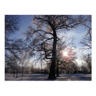 Berea Oak after Ice Storm Postcard
