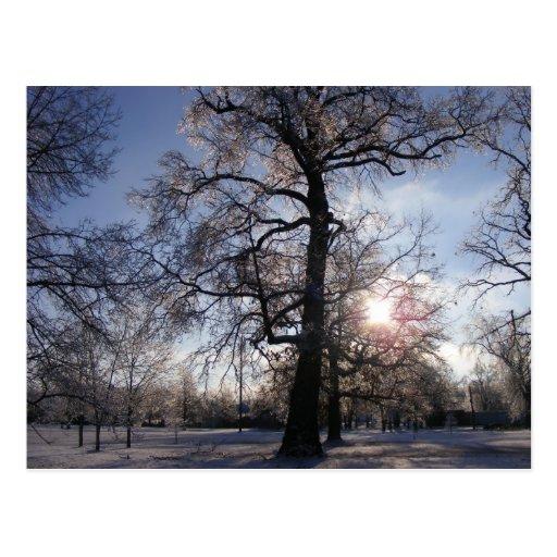 Berea Oak after Ice Storm Post Cards