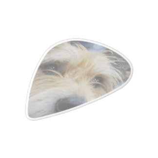Berger Picard Dog White Delrin Guitar Pick
