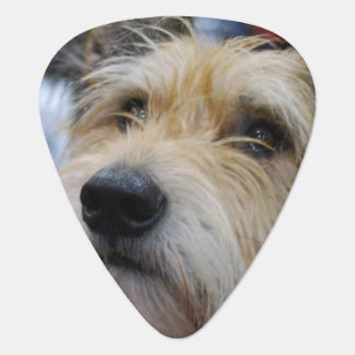 Berger Picard Dog Plectrum