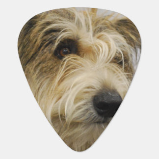Berger Picard Dog Guitar Pick