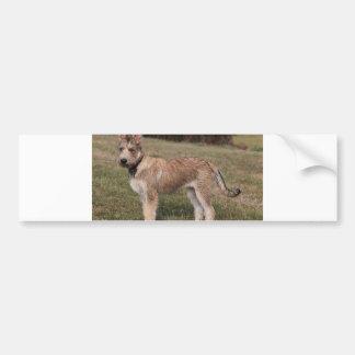 berger picard puppy bumper sticker