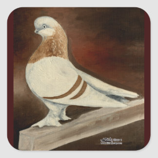 Berliner Shortfaced Pigeon Square Sticker