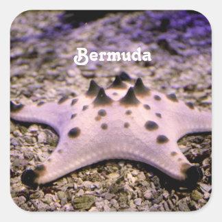 Bermuda Starfish Stickers
