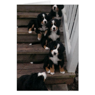 Berner Nation greeting cards