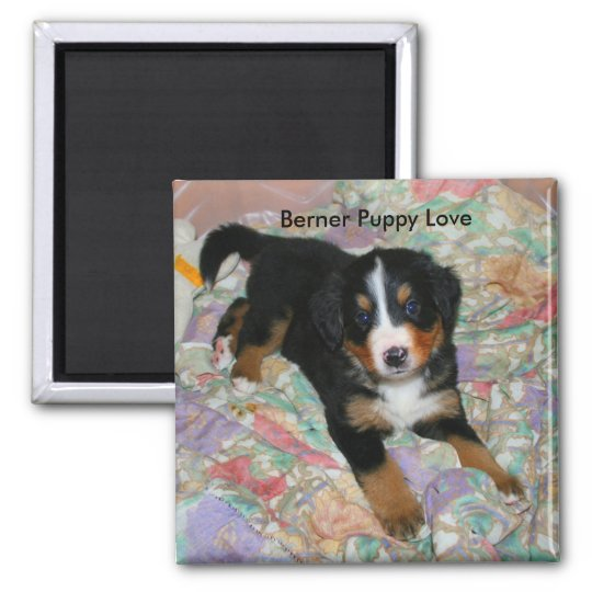Berner Puppy Love Magnet
