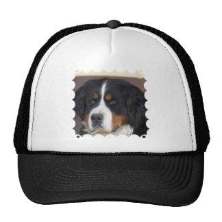 Berner Sennenhund Baseball Hat