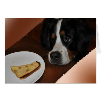 Bernese and food card