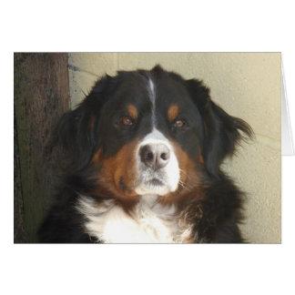 Bernese Dog Card