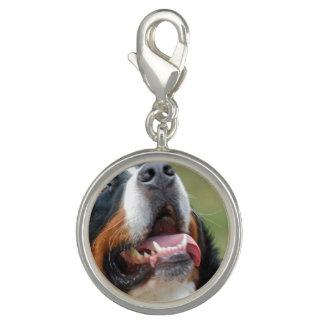 bernese-mountain-dog-14