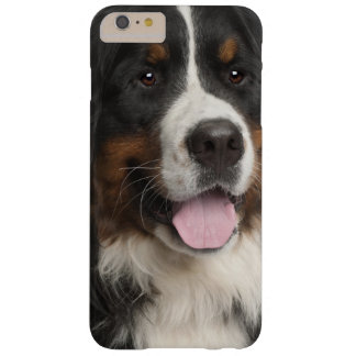 Bernese Mountain Dog (1 year old) Barely There iPhone 6 Plus Case