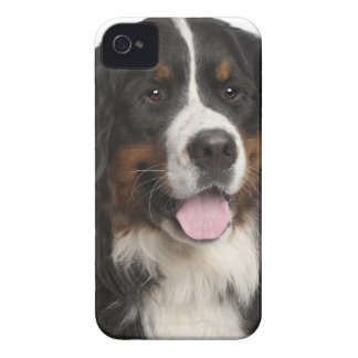 Bernese Mountain Dog (1 year old) iPhone 4 Cover