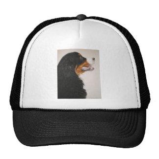 Bernese Mountain Dog 2 Cap