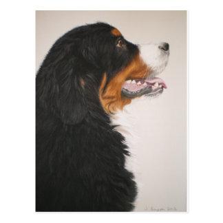 Bernese Mountain Dog 2 Postcard