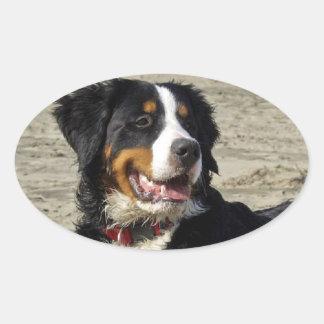 Bernese Mountain dog beautiful photo oval stickers
